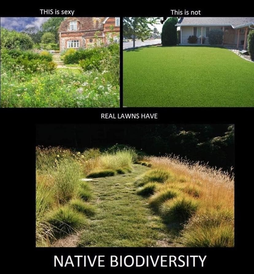 This is what a real lawn should look like